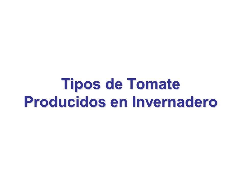 Tipos de Tomate Producidos en Invernadero