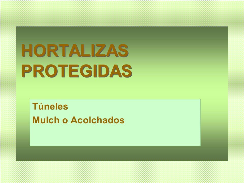 HORTALIZAS PROTEGIDAS Túneles Mulch o Acolchados