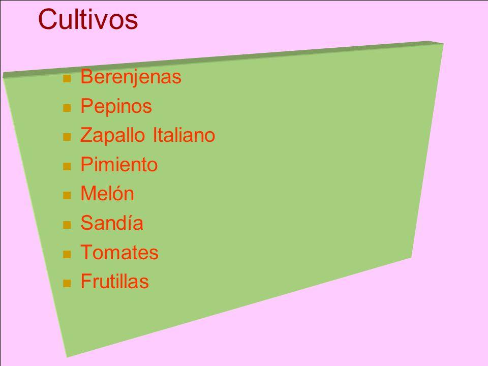 Cultivos Berenjenas Pepinos Zapallo Italiano Pimiento Melón Sandía Tomates Frutillas