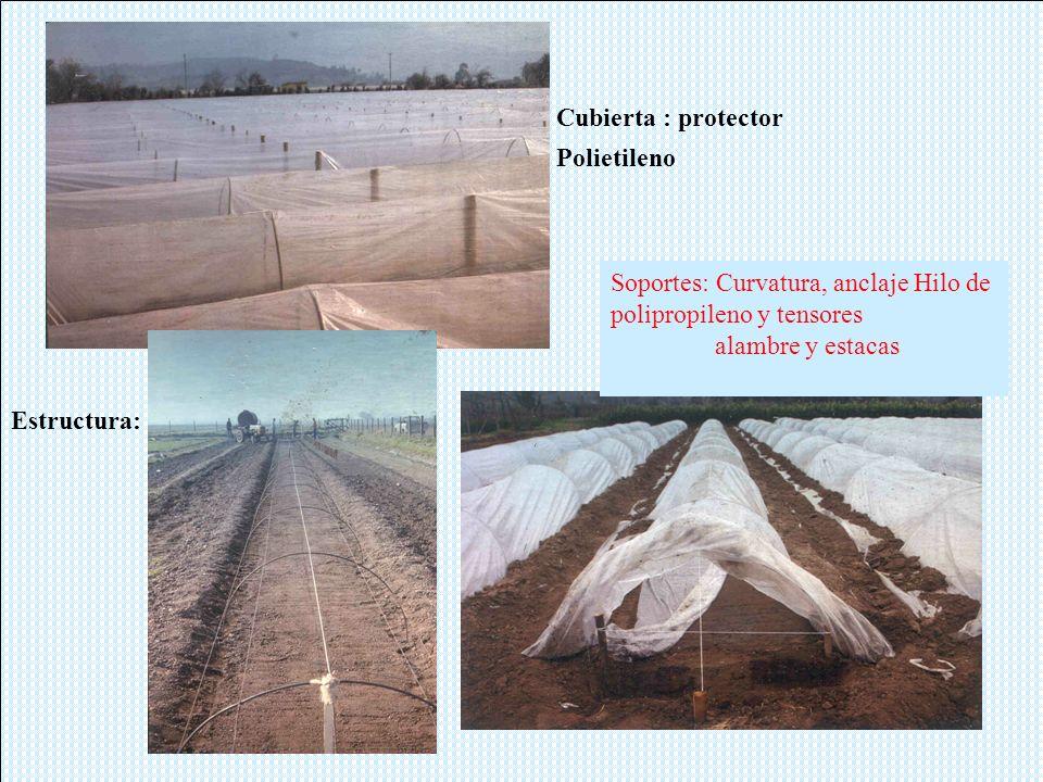 Cubierta : protector Estructura: arcos Polietileno Soportes: Curvatura, anclaje Hilo de polipropileno y tensores alambre y estacas