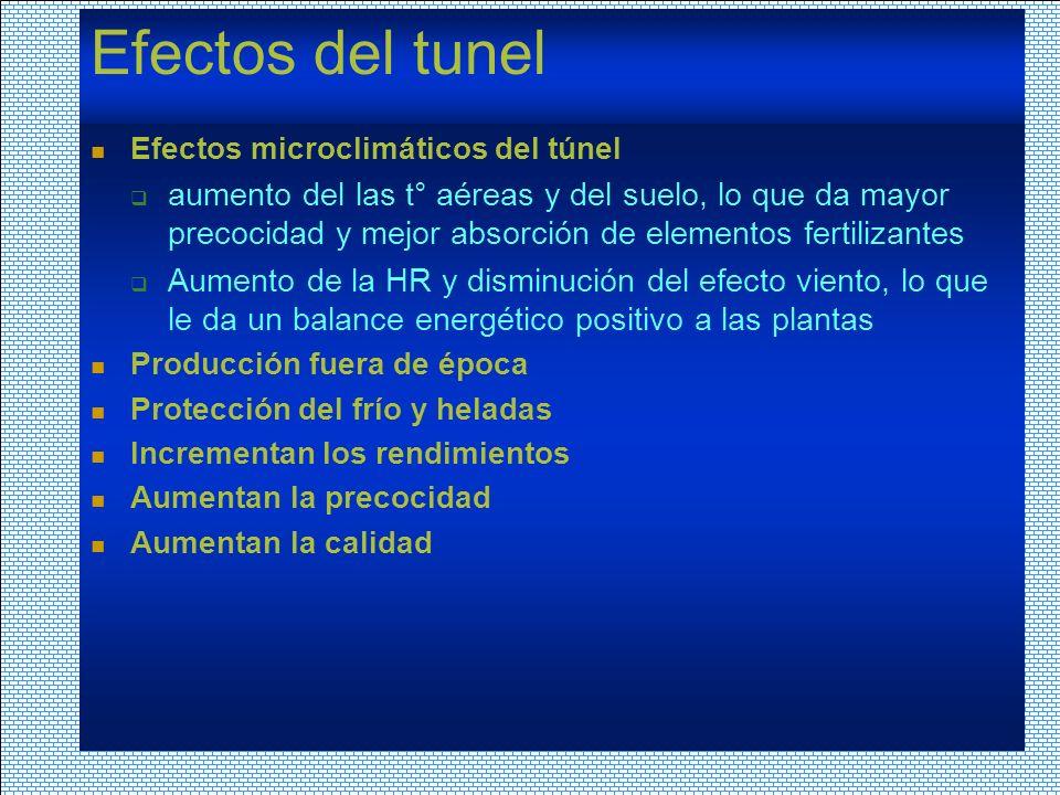 Efectos del tunel Efectos microclimáticos del túnel aumento del las t° aéreas y del suelo, lo que da mayor precocidad y mejor absorción de elementos f