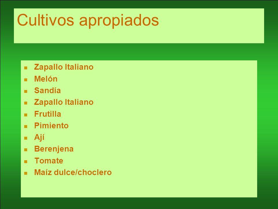 Cultivos apropiados Zapallo Italiano Melón Sandía Zapallo Italiano Frutilla Pimiento Ají Berenjena Tomate Maíz dulce/choclero