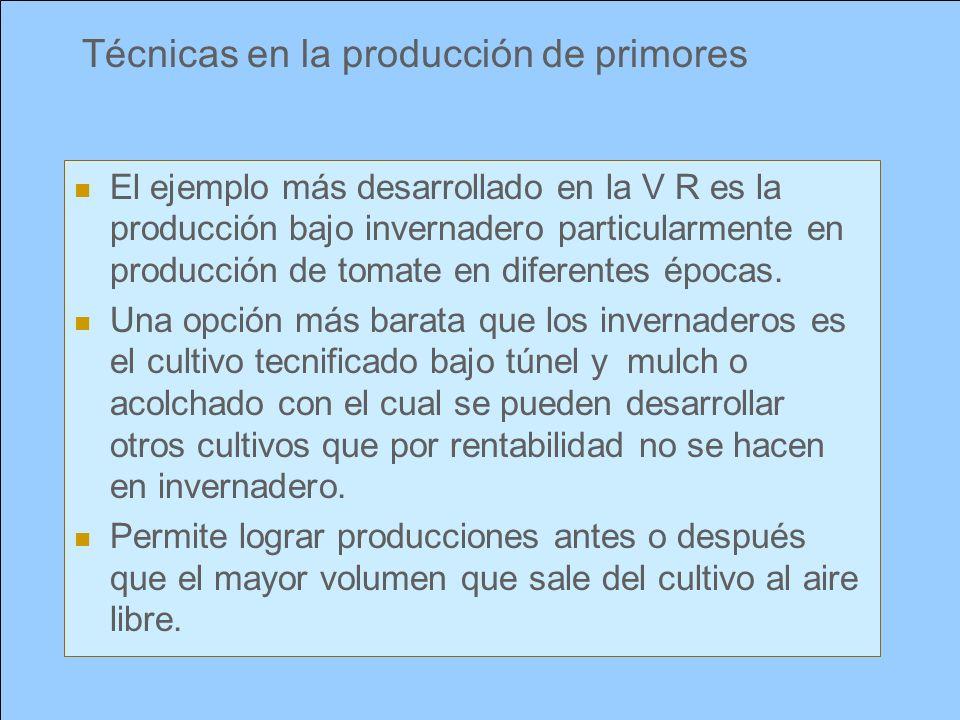Técnicas en la producción de primores El ejemplo más desarrollado en la V R es la producción bajo invernadero particularmente en producción de tomate