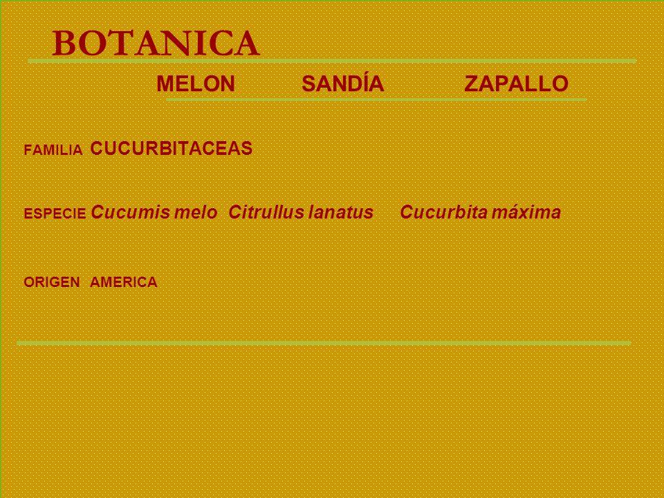 BOTANICA MELON SANDÍA ZAPALLO FAMILIA CUCURBITACEAS ESPECIE Cucumis melo Citrullus lanatus Cucurbita máxima ORIGENAMERICA
