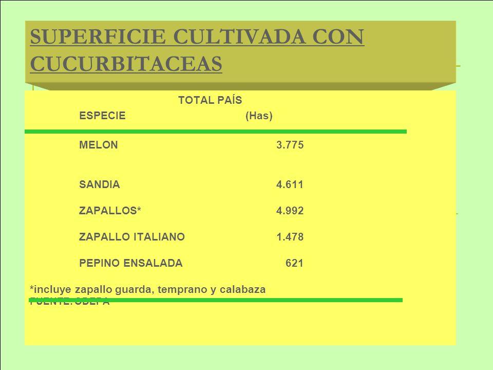 SUPERFICIE CULTIVADA CON CUCURBITACEAS TOTAL PAÍS ESPECIE (Has) MELON3.775 SANDIA4.611 ZAPALLOS*4.992 ZAPALLO ITALIANO1.478 PEPINO ENSALADA 621 *inclu