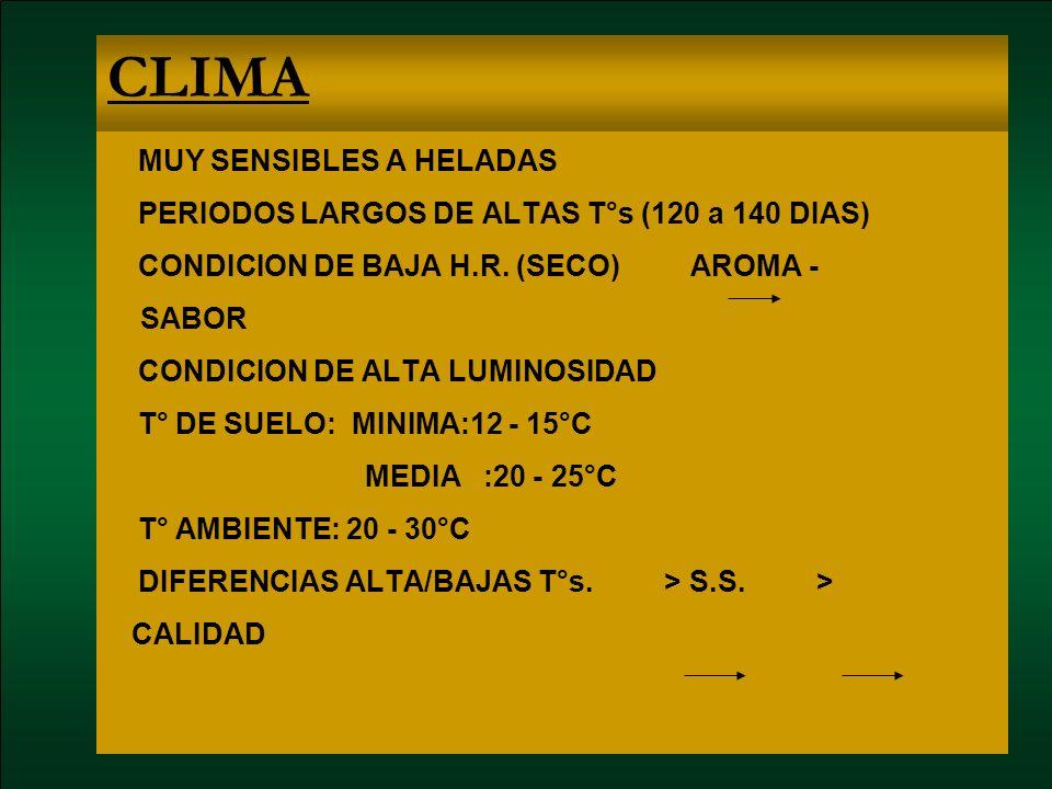 CLIMA MUY SENSIBLES A HELADAS PERIODOS LARGOS DE ALTAS T°s (120 a 140 DIAS) CONDICION DE BAJA H.R. (SECO) AROMA - SABOR CONDICION DE ALTA LUMINOSIDAD