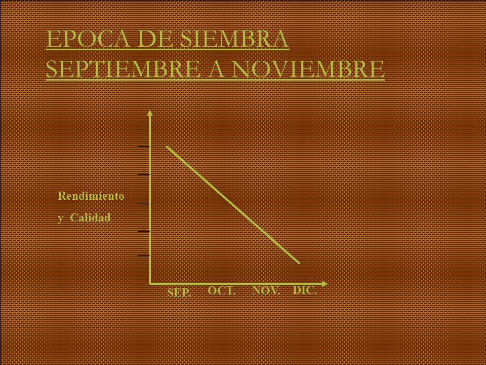 EPOCA DE SIEMBRA SEPTIEMBRE A NOVIEMBRE Rendimiento y Calidad SEP. OCT.NOV. DIC.