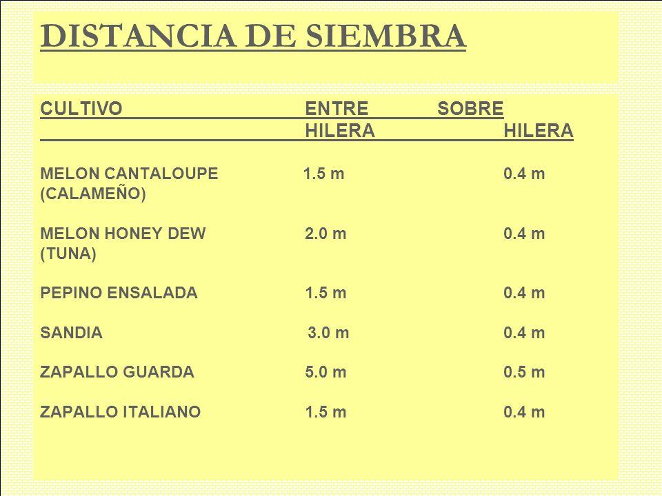 DISTANCIA DE SIEMBRA CULTIVOENTRESOBREHILERA MELON CANTALOUPE 1.5 m0.4 m (CALAMEÑO) MELON HONEY DEW2.0 m0.4 m (TUNA) PEPINO ENSALADA1.5 m0.4 m SANDIA