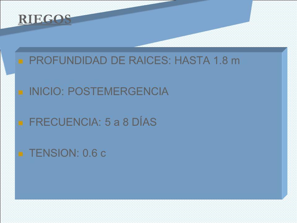 RIEGOS PROFUNDIDAD DE RAICES: HASTA 1.8 m INICIO: POSTEMERGENCIA FRECUENCIA: 5 a 8 DÍAS TENSION: 0.6 c
