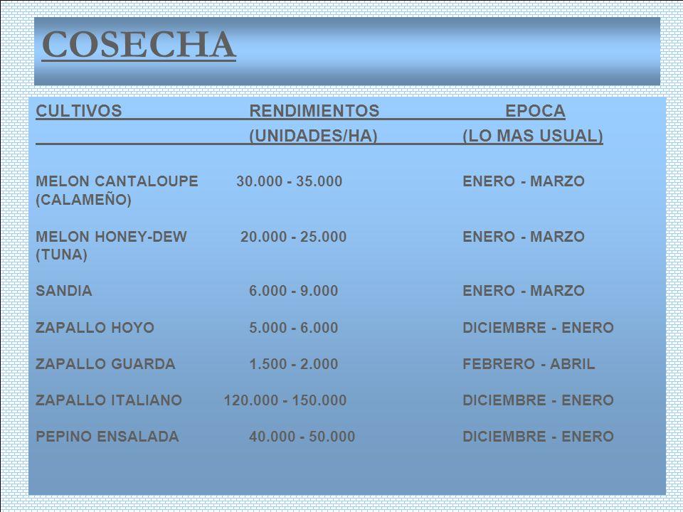 COSECHA CULTIVOSRENDIMIENTOSEPOCA (UNIDADES/HA)(LO MAS USUAL) MELON CANTALOUPE 30.000 - 35.000ENERO - MARZO (CALAMEÑO) MELON HONEY-DEW 20.000 - 25.000