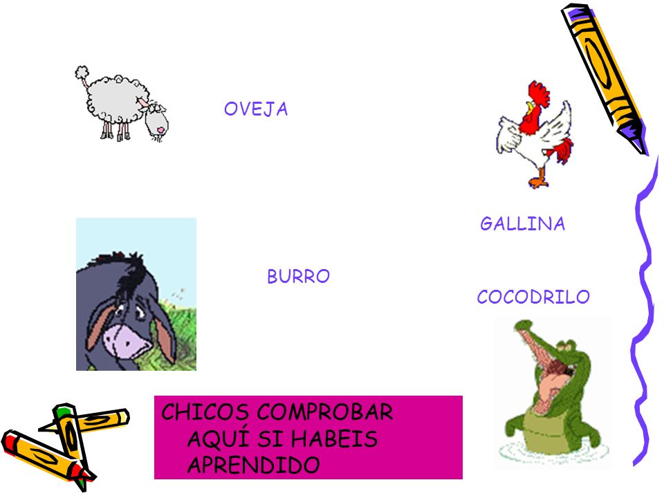 PAJARO CERDO CARACOL CONEJO