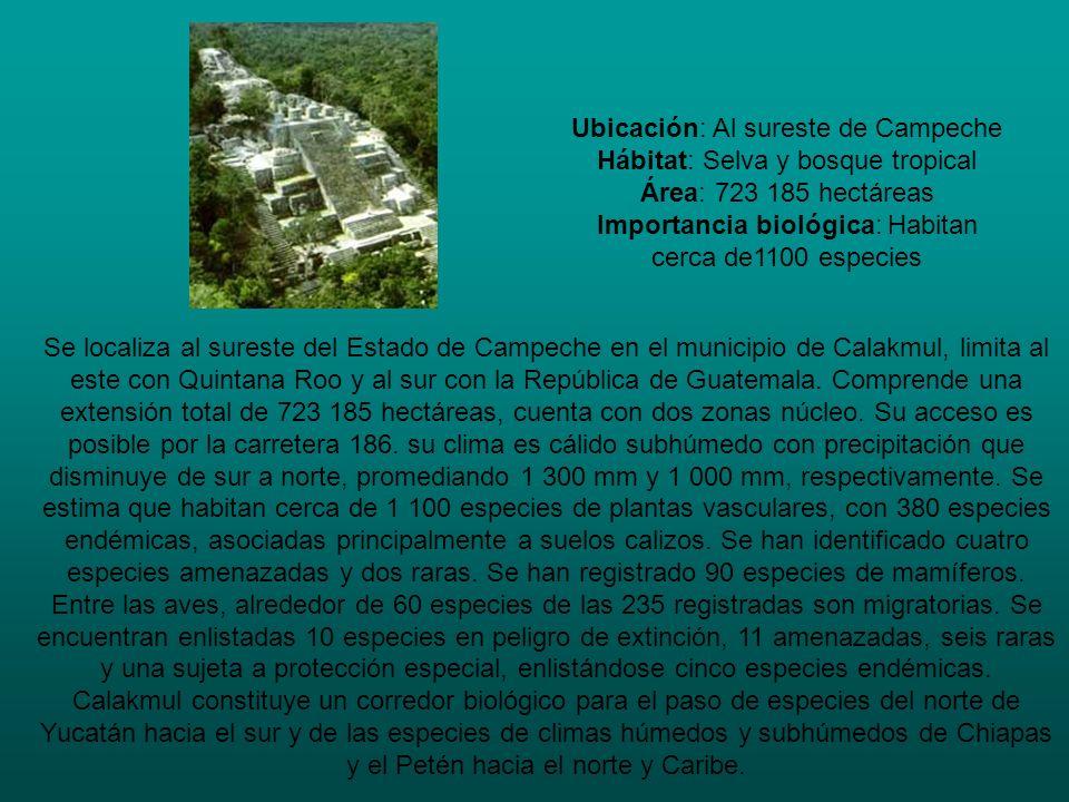 Ubicación: Al sureste de Campeche Hábitat: Selva y bosque tropical Área: 723 185 hectáreas Importancia biológica: Habitan cerca de1100 especies Se loc