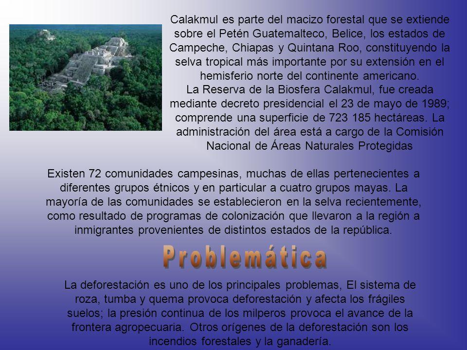 Calakmul es parte del macizo forestal que se extiende sobre el Petén Guatemalteco, Belice, los estados de Campeche, Chiapas y Quintana Roo, constituye