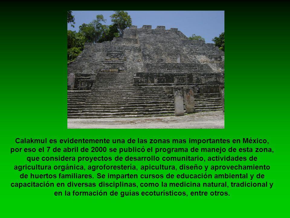 Calakmul es evidentemente una de las zonas mas importantes en México, por eso el 7 de abril de 2000 se publicó el programa de manejo de esta zona, que