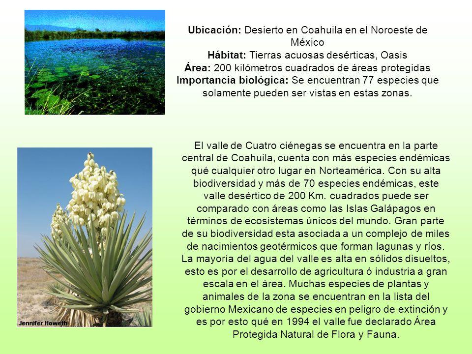 Ubicación: Desierto en Coahuila en el Noroeste de México Hábitat: Tierras acuosas desérticas, Oasis Área: 200 kilómetros cuadrados de áreas protegidas