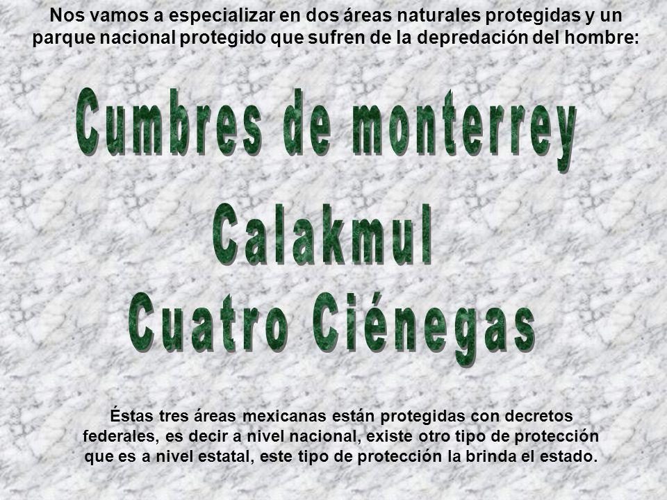 Ubicación: Desierto en Coahuila en el Noroeste de México Hábitat: Tierras acuosas desérticas, Oasis Área: 200 kilómetros cuadrados de áreas protegidas Importancia biológica: Se encuentran 77 especies que solamente pueden ser vistas en estas zonas.