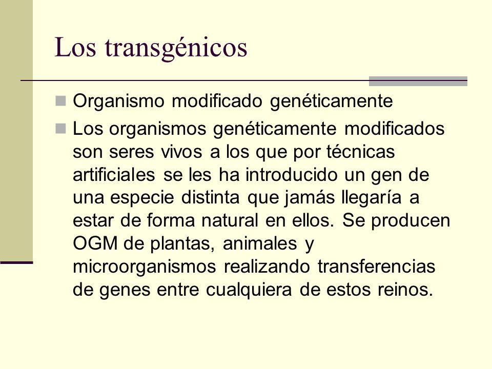 Los transgénicos Organismo modificado genéticamente Los organismos genéticamente modificados son seres vivos a los que por técnicas artificiales se les ha introducido un gen de una especie distinta que jamás llegaría a estar de forma natural en ellos.