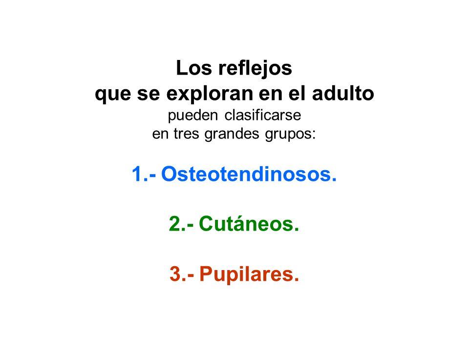 Los reflejos que se exploran en el adulto pueden clasificarse en tres grandes grupos: 1.- Osteotendinosos. 2.- Cutáneos. 3.- Pupilares.