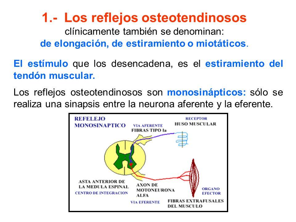 Exploración de los reflejos mucocutáneos: raspando la piel o rozando la mucosa donde se localizan los receptores involucrados en el arco reflejo respectivo: Reflejos Muscocutáneos ReflejoNervio Explorado Nivel Explorado Procedimiento Corneal Vía Aferente: Trigémino (V par) Vía Eferente: Facial (VII par) Protuberancia Utilice una hebra de algo- dón para tocar la cornea Faríngeo Vía Aferente: Glosofaríngeo (IX par) Vía Eferente: Vago (X par).