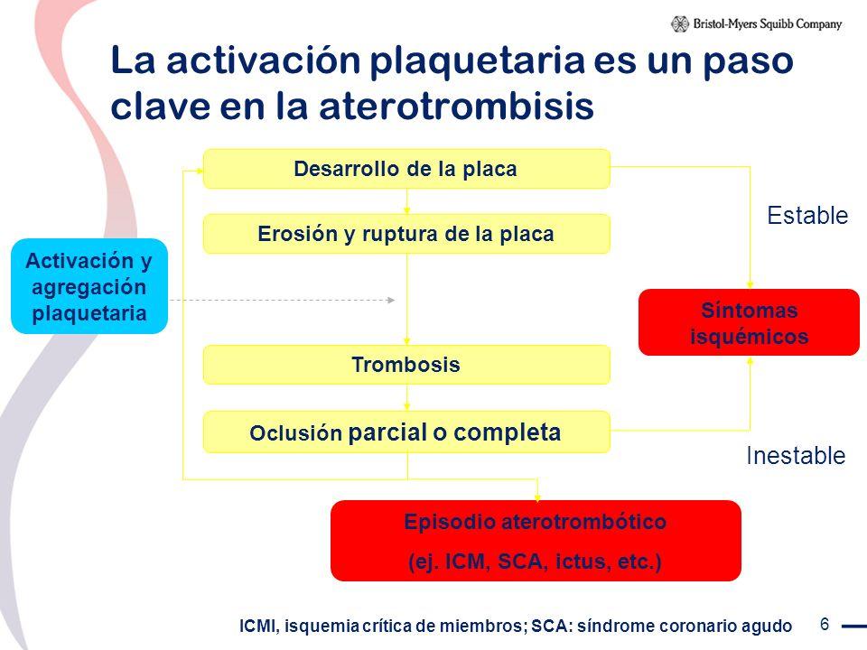 6 Estable Inestable Desarrollo de la placa Erosión y ruptura de la placa Trombosis Oclusión parcial o completa Episodio aterotrombótico (ej. ICM, SCA,
