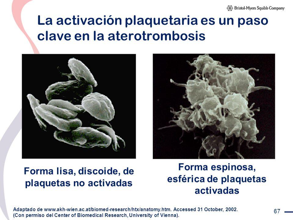 67 La activación plaquetaria es un paso clave en la aterotrombosis Forma lisa, discoide, de plaquetas no activadas Adaptado de www.akh-wien.ac.at/biom