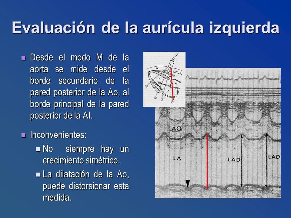 Evaluación de la aurícula izquierda Desde el modo M de la aorta se mide desde el borde secundario de la pared posterior de la Ao, al borde principal d