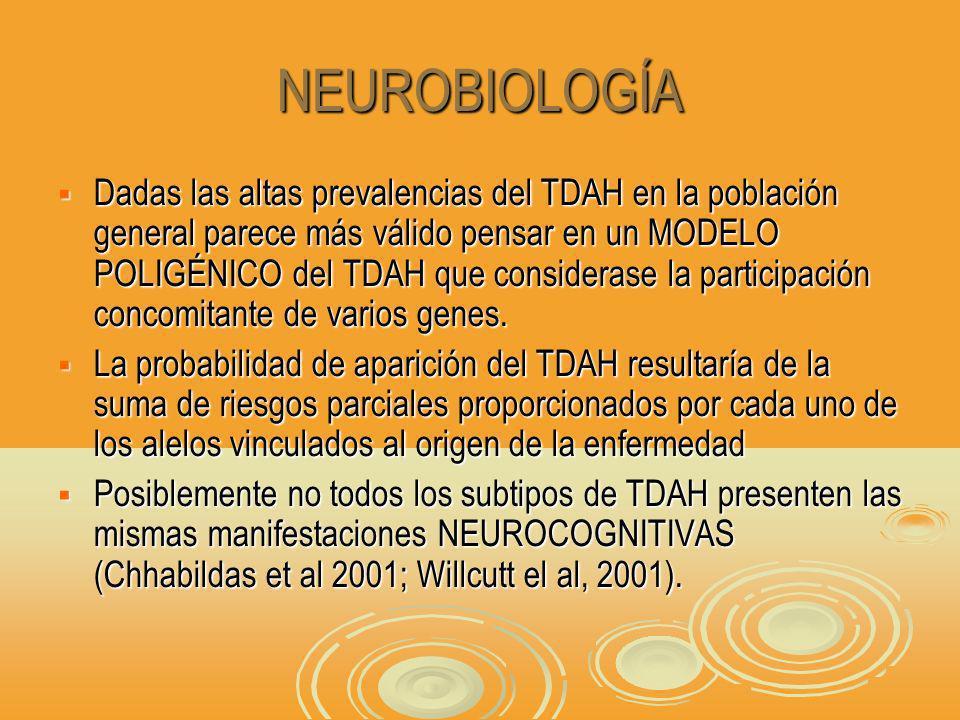NEUROBIOLOGÍA Dadas las altas prevalencias del TDAH en la población general parece más válido pensar en un MODELO POLIGÉNICO del TDAH que considerase la participación concomitante de varios genes.