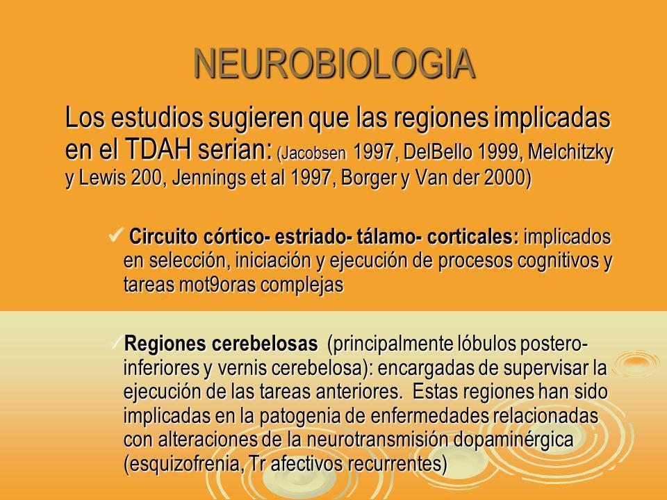 NEUROBIOLOGIA Los estudios sugieren que las regiones implicadas en el TDAH serian: (Jacobsen 1997, DelBello 1999, Melchitzky y Lewis 200, Jennings et al 1997, Borger y Van der 2000) Circuito córtico- estriado- tálamo- corticales: implicados en selección, iniciación y ejecución de procesos cognitivos y tareas mot9oras complejas Circuito córtico- estriado- tálamo- corticales: implicados en selección, iniciación y ejecución de procesos cognitivos y tareas mot9oras complejas Regiones cerebelosas (principalmente lóbulos postero- inferiores y vernis cerebelosa): encargadas de supervisar la ejecución de las tareas anteriores.
