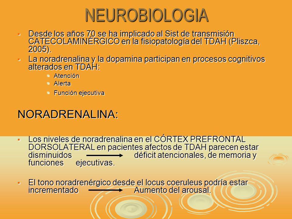 NEUROBIOLOGIA Desde los años 70 se ha implicado al Sist de transmisión CATECOLAMINÉRGICO en la fisiopatología del TDAH (Pliszca, 2005).
