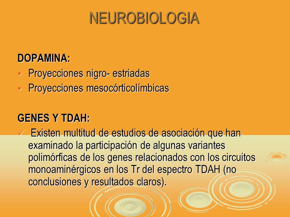 DOPAMINA: Proyecciones nigro- estriadas Proyecciones nigro- estriadas Proyecciones mesocórticolímbicas Proyecciones mesocórticolímbicas GENES Y TDAH: Existen multitud de estudios de asociación que han examinado la participación de algunas variantes polimórficas de los genes relacionados con los circuitos monoaminérgicos en los Tr del espectro TDAH (no conclusiones y resultados claros).