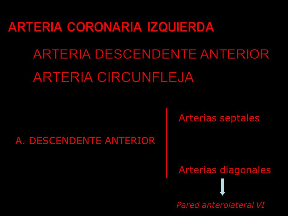 A. DESCENDENTE ANTERIOR Arterias septales Arterias diagonales Pared anterolateral VI