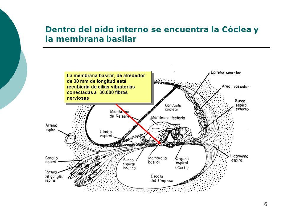 6 Dentro del oído interno se encuentra la Cóclea y la membrana basilar La membrana basilar, de alrededor de 30 mm de longitud está recubierta de cilia