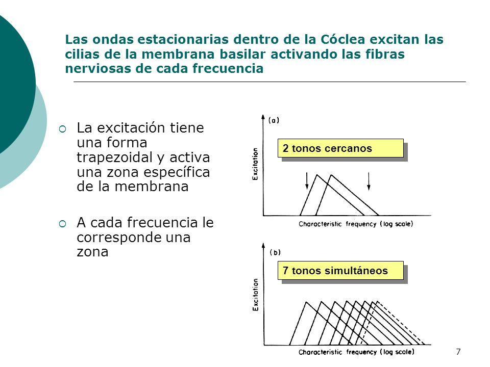 7 Las ondas estacionarias dentro de la Cóclea excitan las cilias de la membrana basilar activando las fibras nerviosas de cada frecuencia La excitació