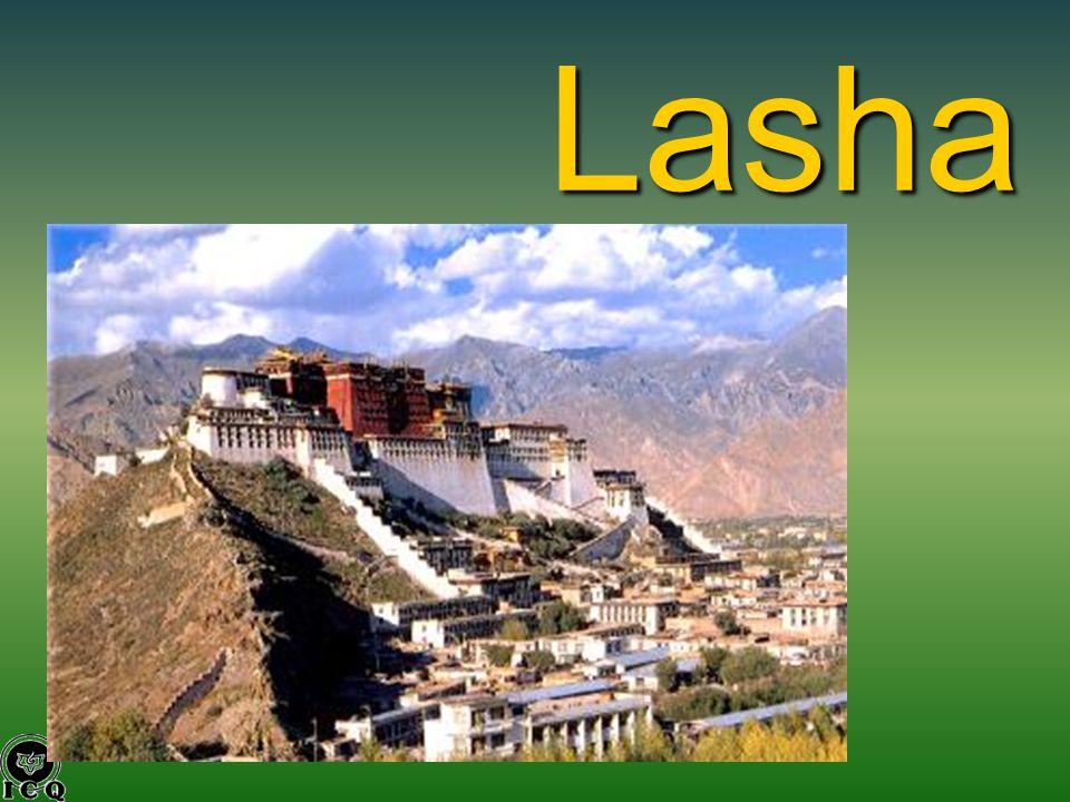 Lasha