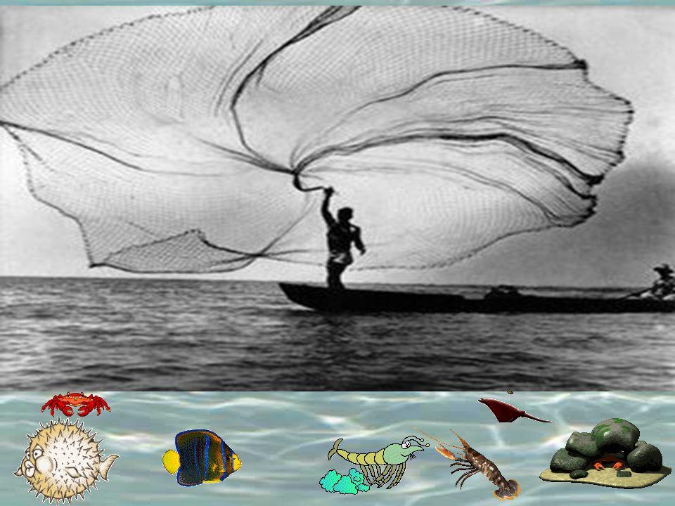 Asimismo el reino de los cielos es semejante a una red, que echada en el mar, recoge de toda clase de peces; y una vez llena, la sacan a la orilla; y sentados, recogen lo bueno en cestas, y lo malo echan fuera.