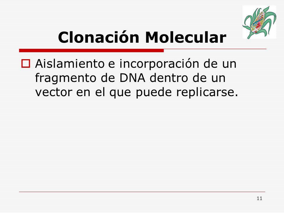 12 Proceso de Clonación Hospedadores: Si el objetivo es obtener grandes cantidades de DNA clonado el organismo utilizado deberá reunir las características siguientes: Crecimiento rápido, crecer en un medio de cultivo sencillo, ausencia de potencial patógeno, capacidad para absorber el DNA, estabilidad en el cultivo.