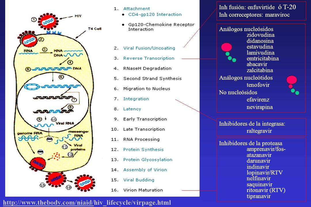 Tractament de la depressió MetabolismeEfecte inductor o inhibidor enzimàtic Risc s´interacció amb els antirretrovirals Triciclics Imipramina Important efecte de primer pas.