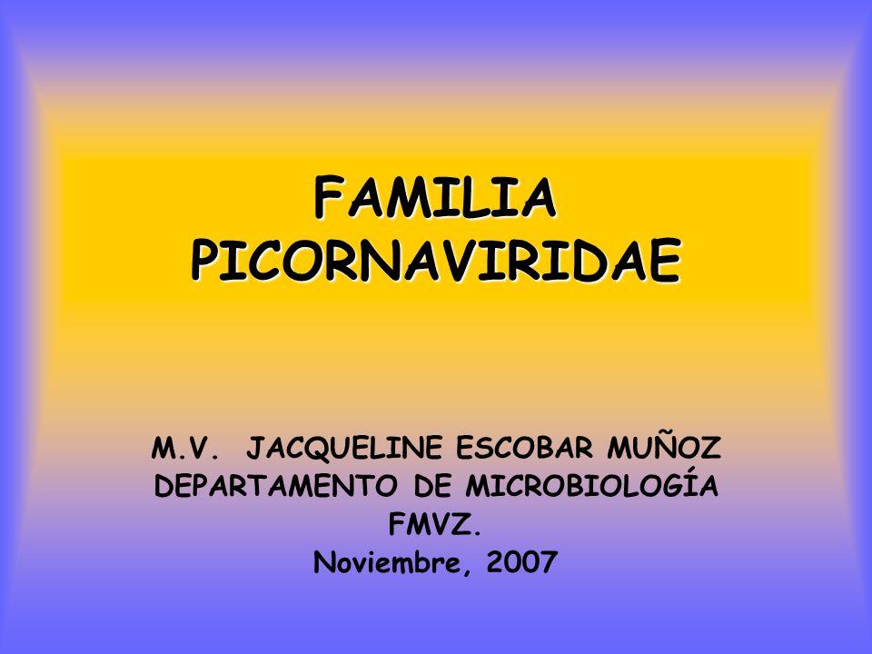 FAMILIA PICORNAVIRIDAE M.V.JACQUELINE ESCOBAR MUÑOZ DEPARTAMENTO DE MICROBIOLOGÍA FMVZ.