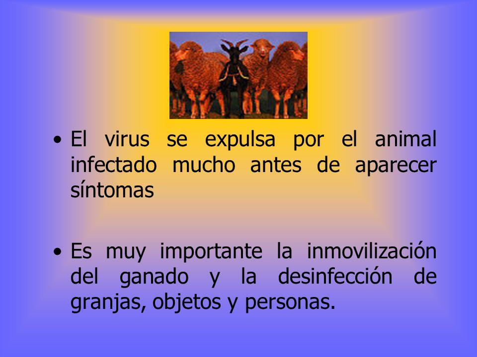 Hay siete tipos inmunológicos con enormes diferencias entre ellos ( A, O, C, SAT1, SAT2, SAT3, ASIA1 ).