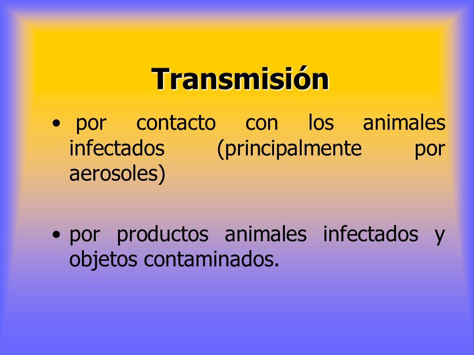 El virus se expulsa por el animal infectado mucho antes de aparecer síntomas Es muy importante la inmovilización del ganado y la desinfección de granj