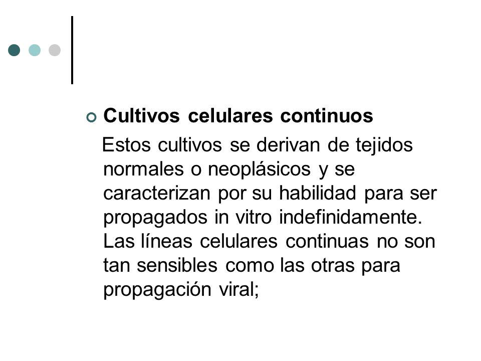 Cultivos celulares continuos Estos cultivos se derivan de tejidos normales o neoplásicos y se caracterizan por su habilidad para ser propagados in vit