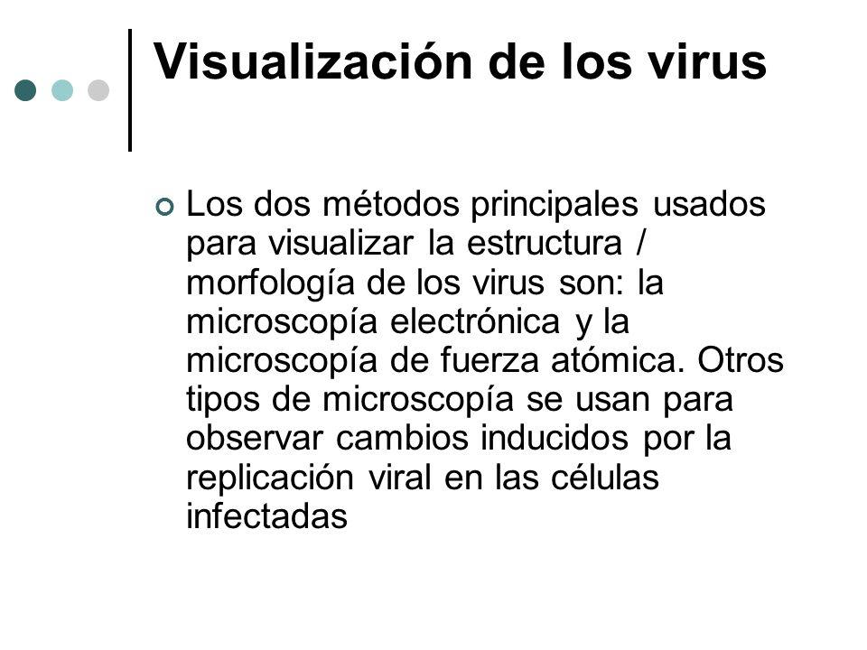 Visualización de los virus Los dos métodos principales usados para visualizar la estructura / morfología de los virus son: la microscopía electrónica