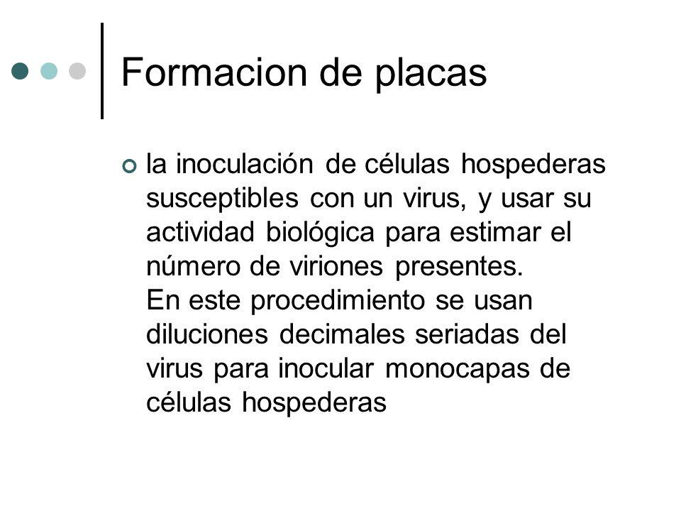 Formacion de placas la inoculación de células hospederas susceptibles con un virus, y usar su actividad biológica para estimar el número de viriones p