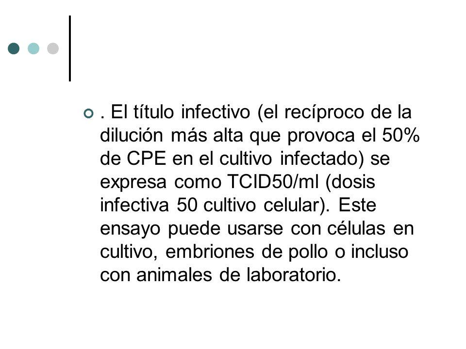 . El título infectivo (el recíproco de la dilución más alta que provoca el 50% de CPE en el cultivo infectado) se expresa como TCID50/ml (dosis infect