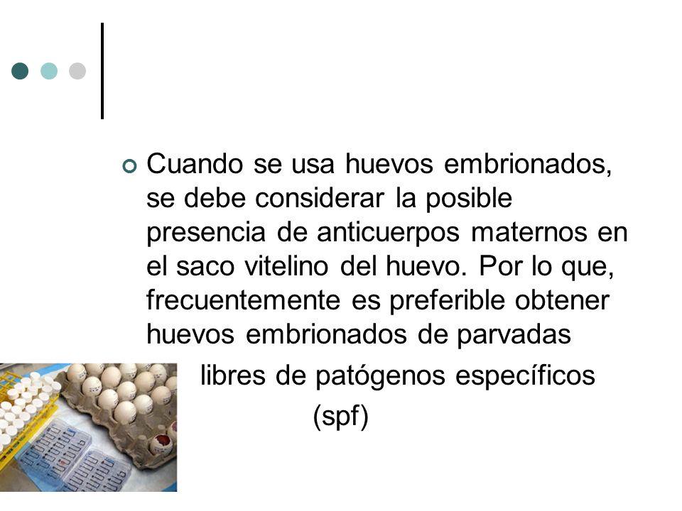 Cuando se usa huevos embrionados, se debe considerar la posible presencia de anticuerpos maternos en el saco vitelino del huevo. Por lo que, frecuente