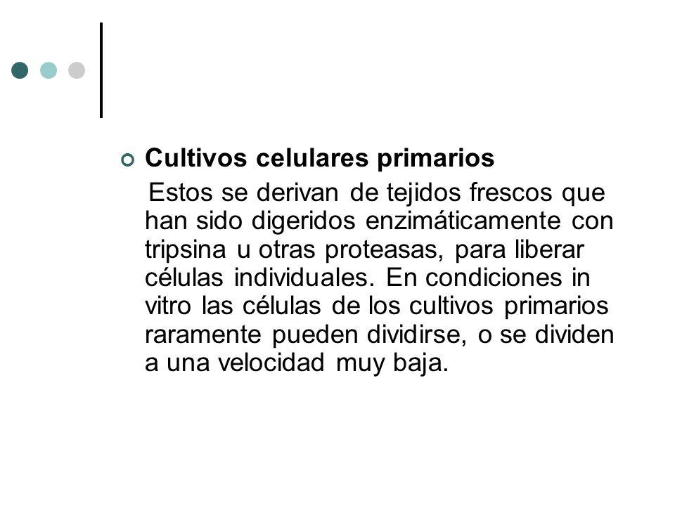 Cultivos celulares primarios Estos se derivan de tejidos frescos que han sido digeridos enzimáticamente con tripsina u otras proteasas, para liberar c