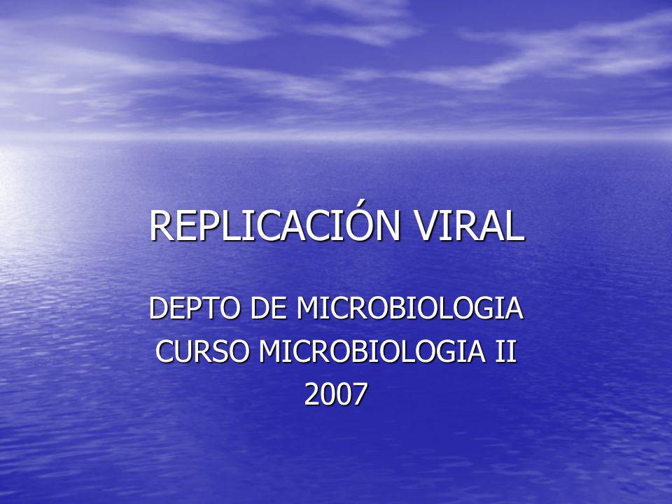 REPLICACIÓN VIRAL DEPTO DE MICROBIOLOGIA CURSO MICROBIOLOGIA II 2007