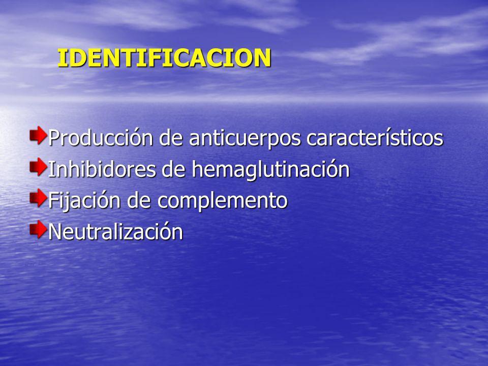 IDENTIFICACION Producción de anticuerpos característicos Inhibidores de hemaglutinación Fijación de complemento Neutralización
