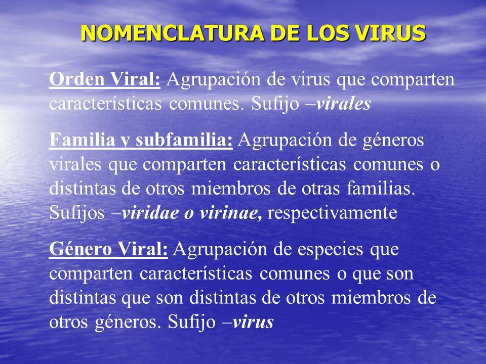 NOMENCLATURA DE LOS VIRUS NOMENCLATURA DE LOS VIRUS Orden Viral: Agrupación de virus que comparten características comunes. Sufijo –virales Familia y