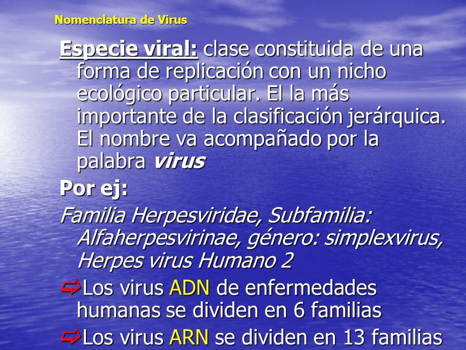 Nomenclatura de Virus Especie viral: clase constituida de una forma de replicación con un nicho ecológico particular. El la más importante de la clasi